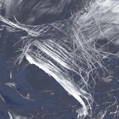 Lumix palmier 004-BG-rec1.jpg