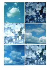Nuages&fleurs-sitea&n.jpg